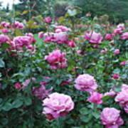 Laugerfeld Roses Art Print