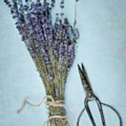 Lavender And Antique Scissors Art Print