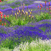 Lavender And Flowers Oh My Art Print