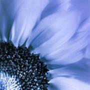 Lavender Blue Silk Art Print