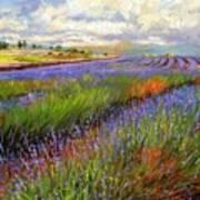 Lavender Field Art Print by David Stribbling