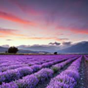 Lavender Field Print by Evgeni Dinev Photography