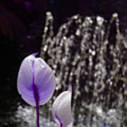 Lavender Flower At Fountain Art Print