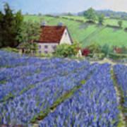 Lavender Hill Art Print