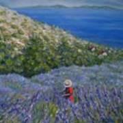 Lavender In Full  Bloom Art Print