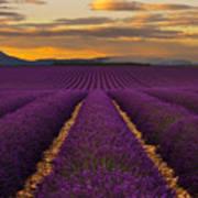 Lavender Provence Art Print