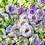 Lavender Ranunculus  Art Print