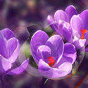 Lavender Spring Art Print