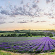 Lavender Sunset Panorama Art Print