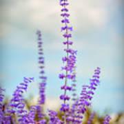 Lavender To The Sky Art Print