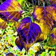 Lavish Leaves 3 Art Print