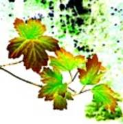 Lavish Leaves 4 Art Print