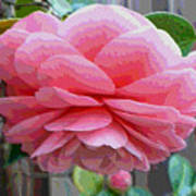 Layers Of Pink Camellia - Digital Art Art Print