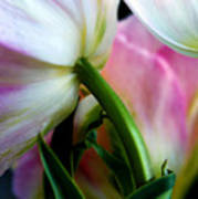 Layers Of Tulips Print by Marilyn Hunt