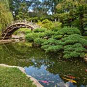 Lead The Way - The Beautiful Japanese Gardens At The Huntington Library With Koi Swimming. Art Print