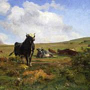 Leader Of The Herd Art Print