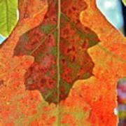 Leaf Behind Art Print