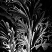 Leaf Detail 2 Black And White Art Print