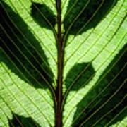 Leaf Detail Art Print