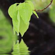 Leaf Drop Art Print