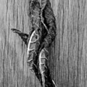 Leaf Entwined In Black And White Art Print