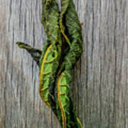 Leaf Entwined Art Print