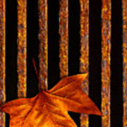 Leaf In Drain Art Print by Carlos Caetano