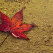 Leaf In The Rain Nature Photograph Art Print