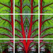 Leaf Of Life Art Print