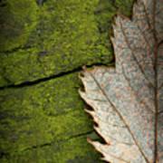 Leaf On Green Wood Art Print