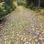 Leaf-strewn Trail Art Print