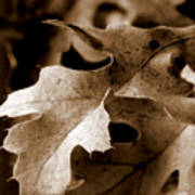 Leaf Study In Sepia IIi Art Print