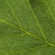Leaf Textures Art Print