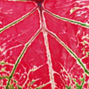Leaf Veins Art Print
