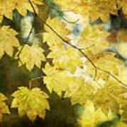 Leaf Zen T Art Print