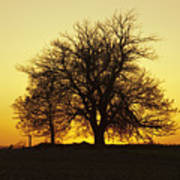 Leafless Tree Against Sunset Sky Art Print
