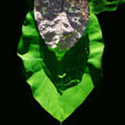 Leaf.three Layers Art Print