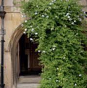 Leafy Archway  Art Print