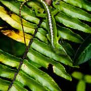 Leafy Lizard Art Print