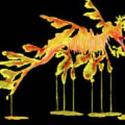 Leafy Sea Dragon On Black Art Print