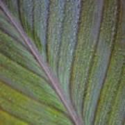 Leafy Texture Art Print