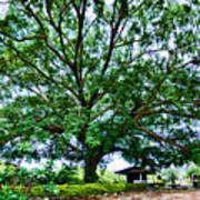 Leafy Tree Art Print