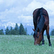 Leaning Horse Art Print