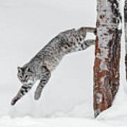 Leapin Bobcat Art Print