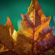 Leaves 971 Art Print