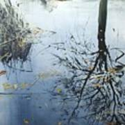 Leaves And Reeds On Tree Reflection Art Print