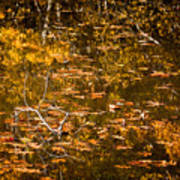 Leaves And Reflections Print by Susan Cole Kelly