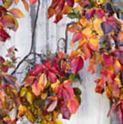 Leaves And Vines Art Print