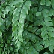 Leaves Cascading Art Print