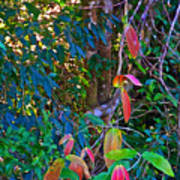 Leaves Changing Color As Autumn Approaches In Iguazu Falls National Park-argentina   Art Print